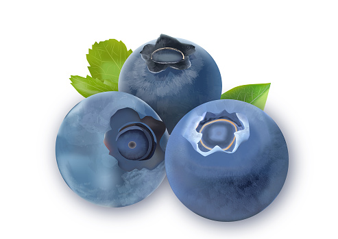 bilberries-clipart-17